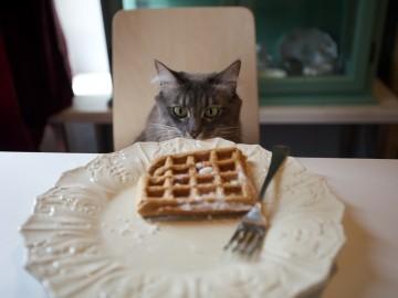 Cat & Waffle
