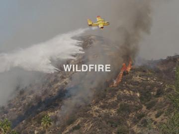 WILDFIRE_WEB